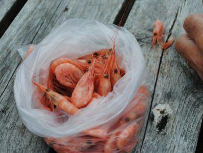Prescribing for shrimps
