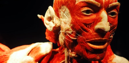 Podcast | Getting under your skin; a visit to Body Worlds and the art of plastination