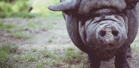IR35 intermediary legislation: turning a sow's ear into a silk purse